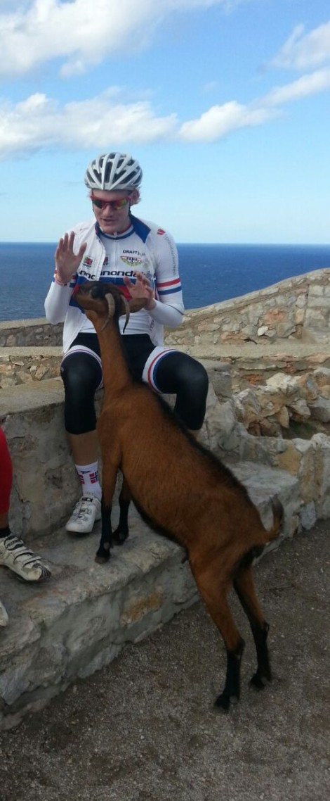Her er en av de beste lokale klatrerne, geiten gordo